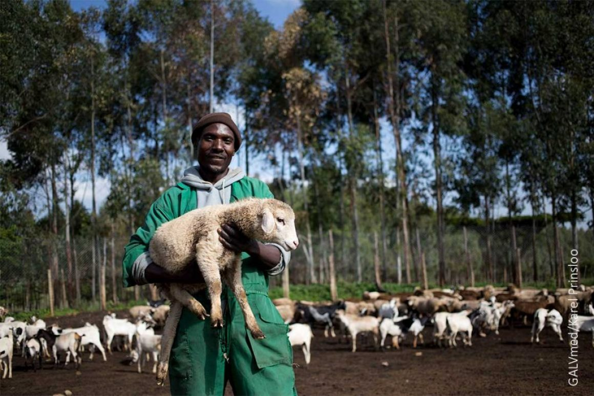 Worker-,-Dickson-Miese-,-pose-with-a-goat-at-the-farm-,-Mara-outside-the-Kenyan-city-of-Eldoret,-Monday,-8-June,-2015